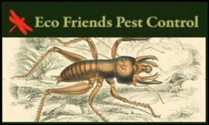 Eco Friends Pest Control thumbnail